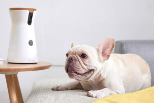 This Camera Is A Must-Have For Pet Owners, And It's Still On Sale